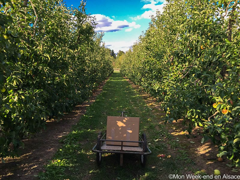 It's fall, let's all go to free apple picking!