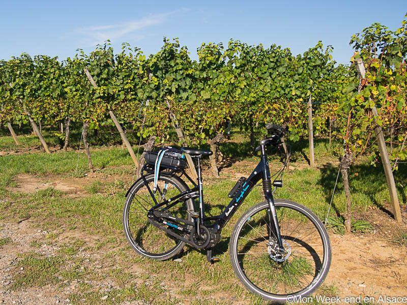 Riding an electric bike on the Wine Route with Alsa Cyclo Tours