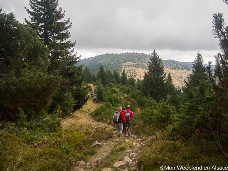 Hike around Sondernach, in the Valley of Munster (7h)